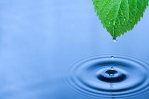 Mindfulness Buddhista