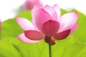 Loto Meditazione Vipassana